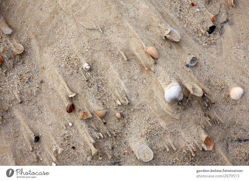 Sandgeschichten Ferien & Urlaub & Reisen Natur Sommer Pflanze blau weiß Freude Strand schwarz Bewegung Glück Stein orange braun Ausflug