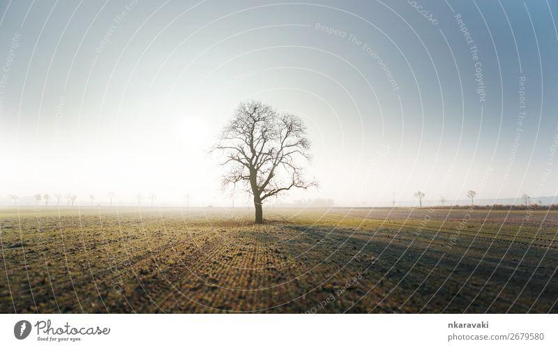 Baum im Herbstmorgennebel Umwelt Landschaft Pflanze Erde Wolkenloser Himmel Sonnenaufgang Sonnenuntergang Nebel Feld Dorf Stadtrand Mut authentisch Farbfoto