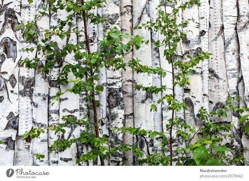 Im Land der Birken Tourismus Handwerk Natur Baum Sträucher Wald Haus Hütte Bauwerk Gebäude Architektur Mauer Wand Fassade Holz Häusliches Leben bizarr chaotisch