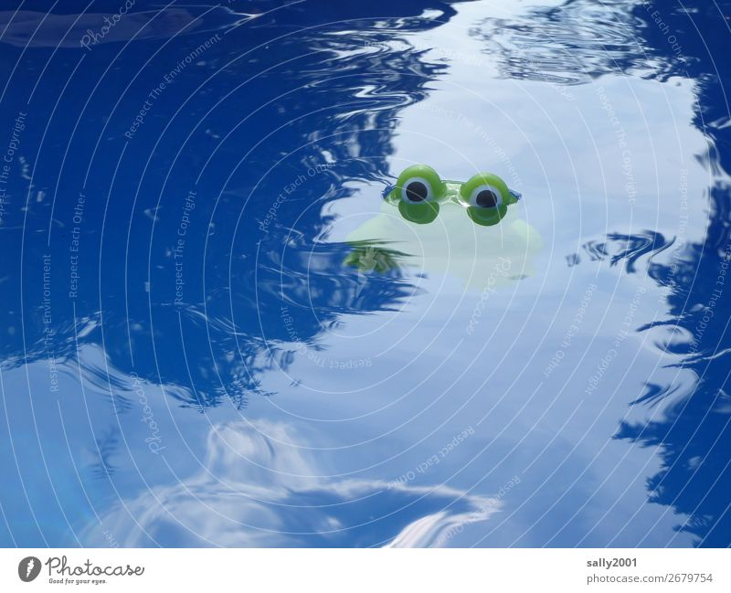 Nessie... Sommer Tier Frosch Auge 1 beobachten Schwimmen & Baden dunkel kalt lustig Neugier grün entdecken Schwimmbad Plastikfigur Ungeheuer