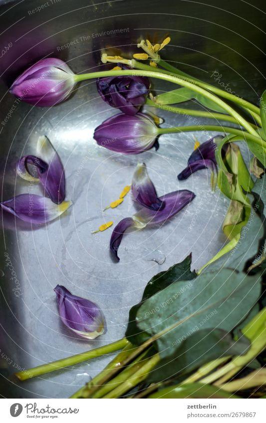 Tulpen Müll Biomüll Blume Blumenstrauß Blühend Blüte Menschenleer Textfreiraum verblüht wegwerfen kaputt welk Wasser Im Wasser treiben Becken Waschbecken