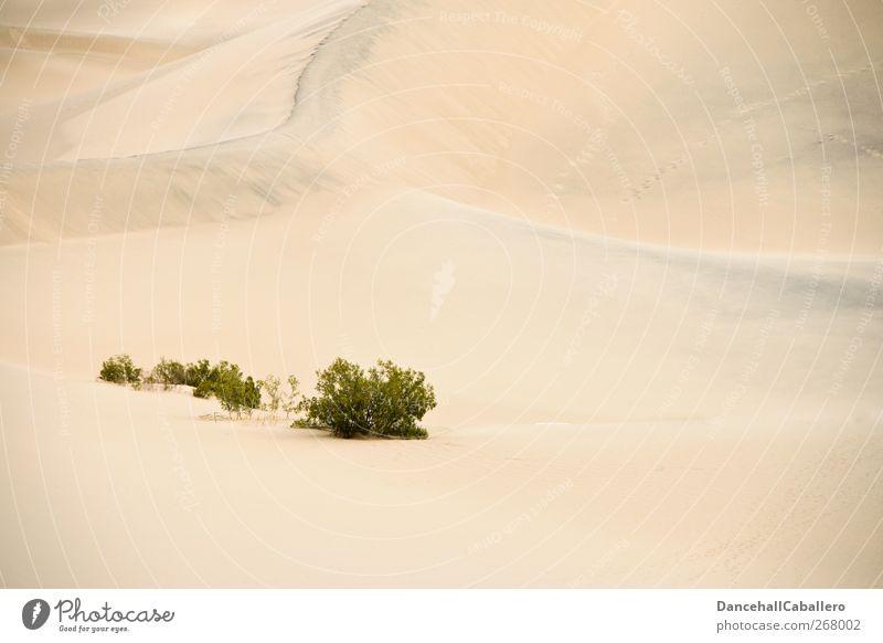 CA l die Wüste lebt Natur grün Ferien & Urlaub & Reisen Pflanze ruhig Einsamkeit Umwelt Landschaft Wärme Freiheit Sand Linie außergewöhnlich Tourismus Abenteuer