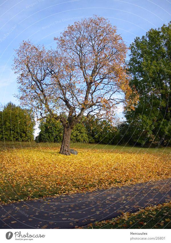 Herbstlaub Natur Baum grün Blatt gelb