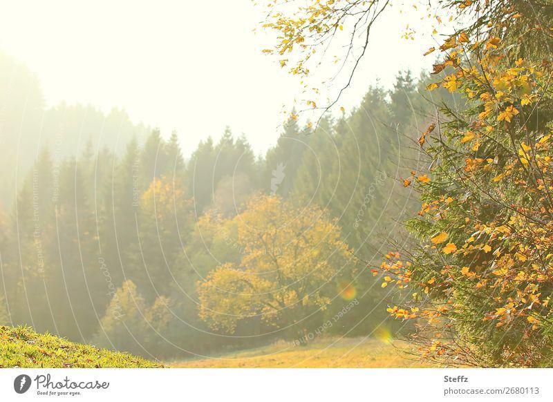 Lichtnuancen Umwelt Natur Landschaft Pflanze Herbst Schönes Wetter Baum Herbstlaub Wiese Wald Waldrand schön gelb grün Stimmung Romantik Lichtstimmung