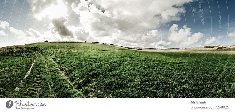 immer weiter Natur Landschaft Pflanze Himmel Wolken Sommer Gras Feld Fußweg Gelassenheit ruhig Freiheit grün Ferne nordfrankreich Frankreich Farbfoto