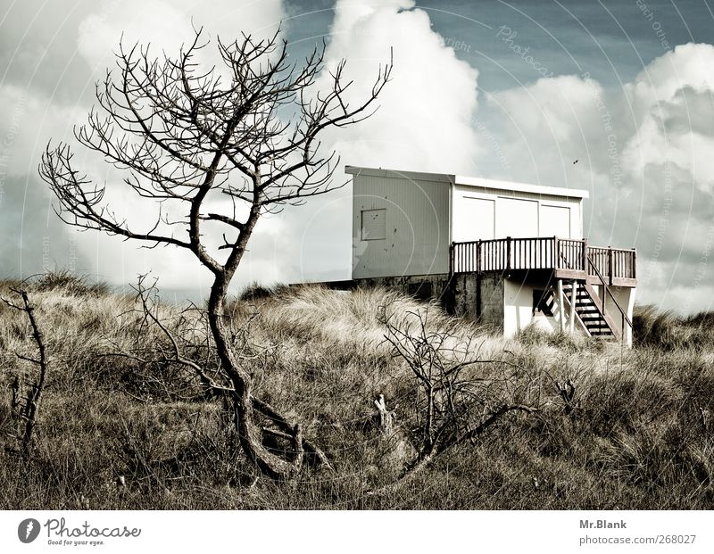 badehaus Baum Einsamkeit Erholung Düne Hütte Terrasse Kleinstadt Dünengras