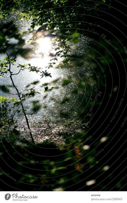 Waldlicht 2 Natur Pflanze Wasser Baum Sträucher Blatt grün schwarz Idylle ruhig Gedeckte Farben Außenaufnahme Menschenleer Licht Schatten Silhouette