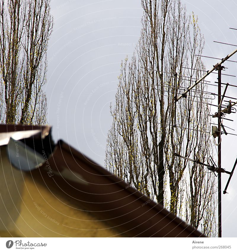 Empfänger Technik & Technologie Unterhaltungselektronik Pflanze Himmel Baum Menschenleer Haus Gebäude Dach Dachrinne Antenne Linie Fernsehen schauen eckig blau