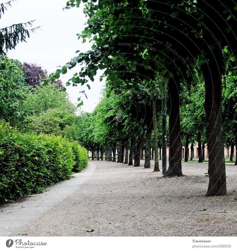 Karlsruhe: Karl ist weg! grün Baum ruhig Holz Wege & Pfade grau Sand Park gehen Ordnung Sträucher saftig Allee Karlsruhe Städtereise
