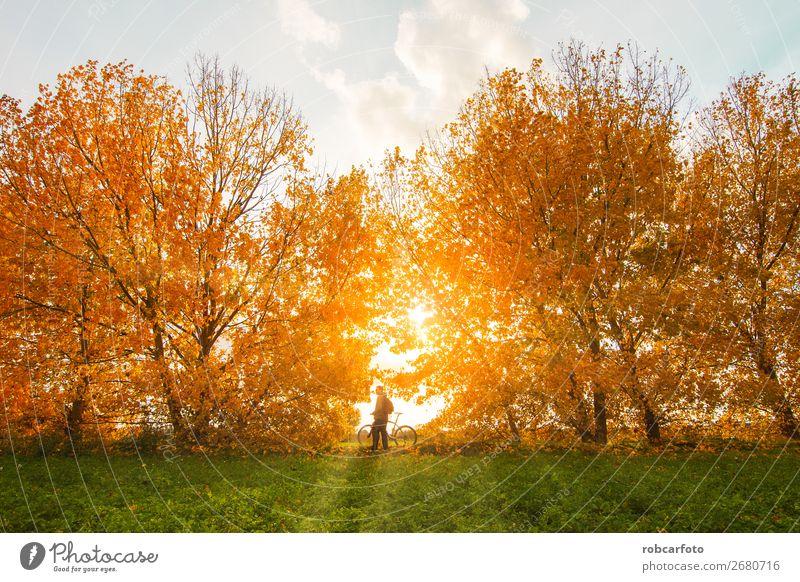 Mann mit Fahrrad mit Bäumen im Herbst Lifestyle Freude Abenteuer Berge u. Gebirge Sport Fahrradfahren Erwachsene Natur Landschaft Baum Wald Straße Wege & Pfade