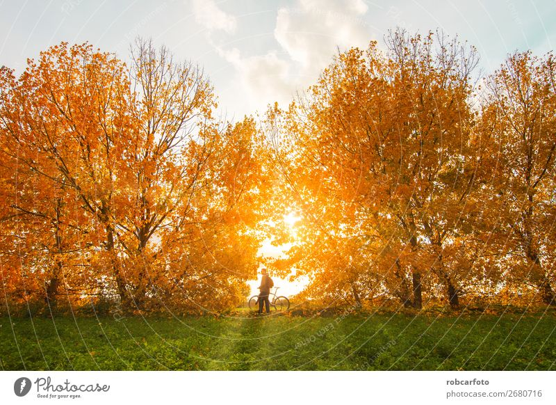 Natur Mann Landschaft Baum Freude Wald Berge u. Gebirge Straße Lifestyle Erwachsene Herbst Wege & Pfade Sport Lächeln Aktion Abenteuer