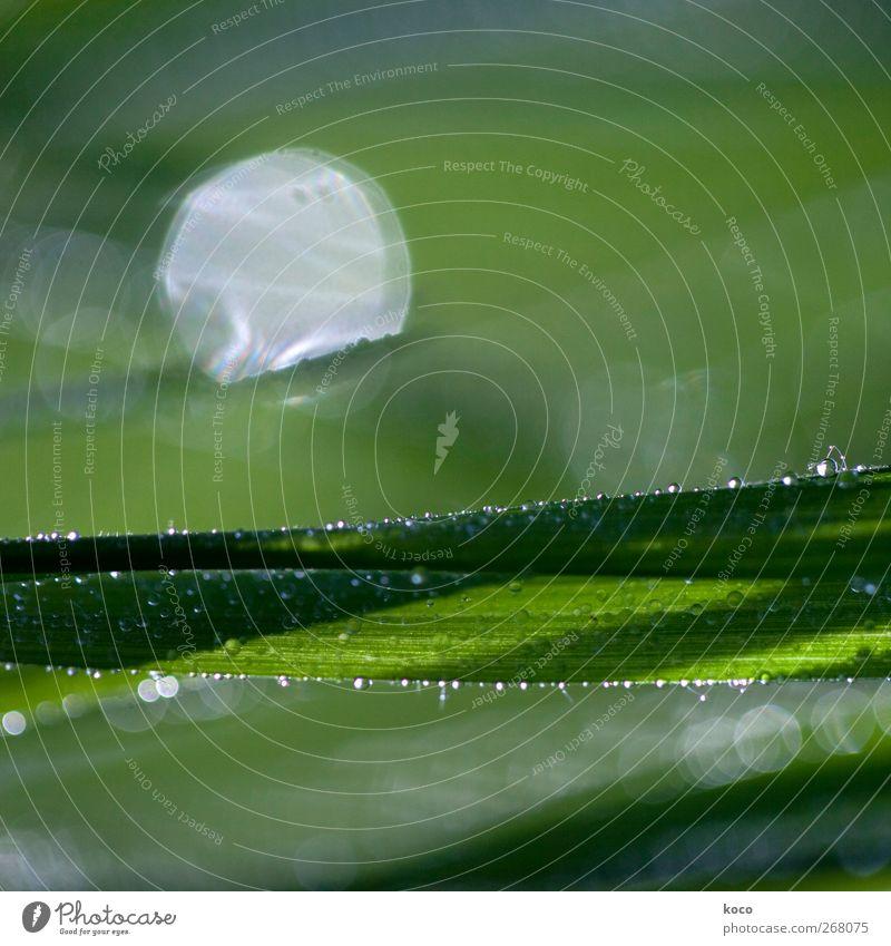 Sonnenaufgang Natur weiß grün schön Pflanze Sommer Blatt schwarz Frühling Gras träumen Linie glänzend frisch Wassertropfen