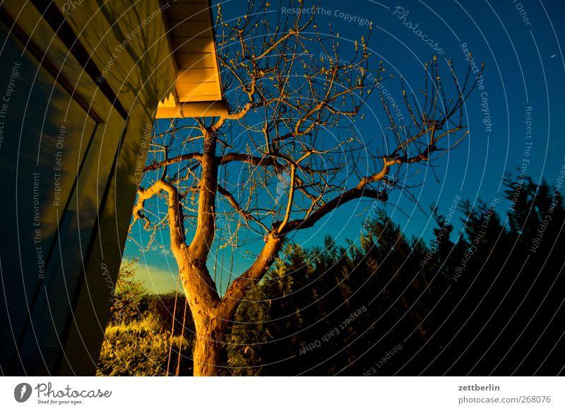 Apfelbaum Natur Himmel (Jenseits) Sommer Baum Landschaft Freude Umwelt Frühling Garten hell Wetter Freizeit & Hobby Klima Ast Schönes Wetter Zweig
