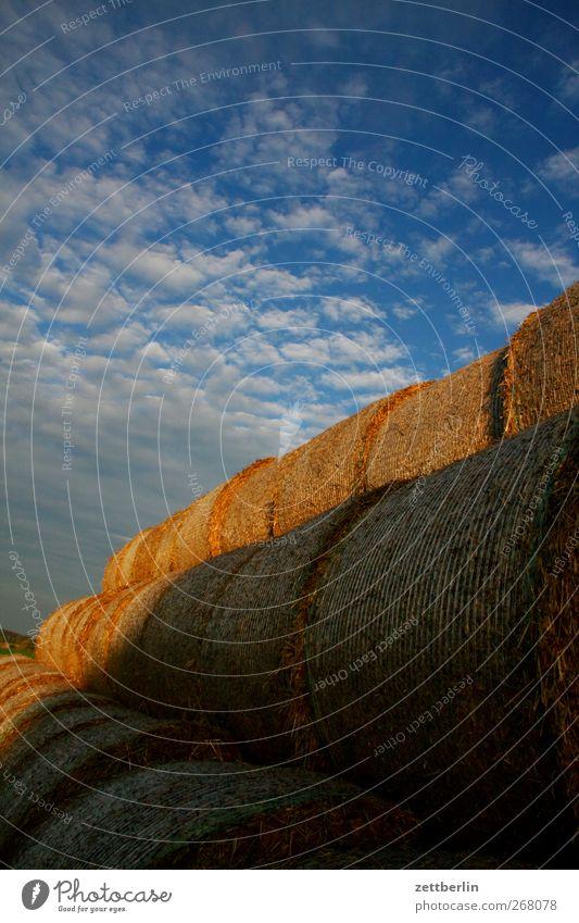 Stroh Landwirtschaft Forstwirtschaft Feierabend Umwelt Natur Landschaft Himmel Wolken Sonnenaufgang Sonnenuntergang Herbst Klima Klimawandel Wetter
