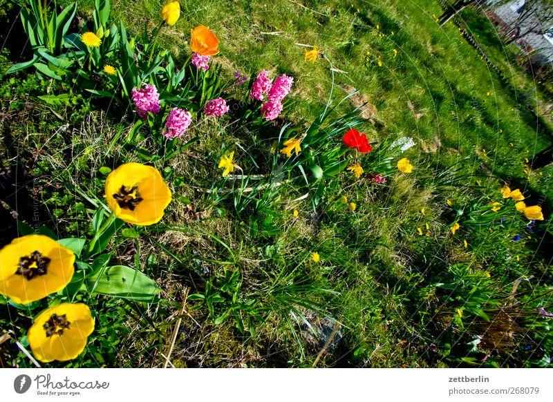 Blumengroup Natur Ferien & Urlaub & Reisen Pflanze Sommer Blume Blatt Umwelt Landschaft Wiese Frühling Gras Garten Blüte Park Erde Wetter