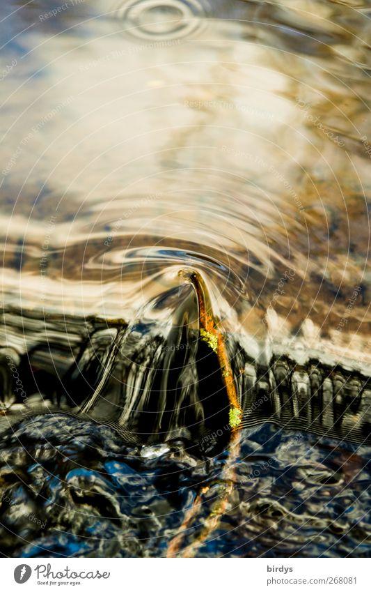 Wasserwege Natur schön Leben Bewegung natürlich authentisch Kreis weich Sauberkeit Ast rein Flüssigkeit Wasseroberfläche Umweltschutz Bach