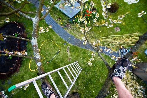 Kirschbaum Freizeit & Hobby Abenteuer Garten Mann Erwachsene Fuß 1 Mensch Natur Pflanze Frühling Klima Blume Blüte Wiese Wachstum Freude Frühlingsgefühle