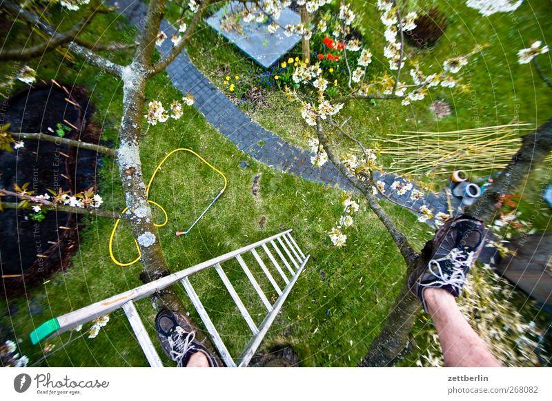 Kirschbaum Mensch Mann Natur Pflanze Blume Freude Erwachsene Wiese Frühling Garten Blüte Fuß Freizeit & Hobby Klima Abenteuer Wachstum