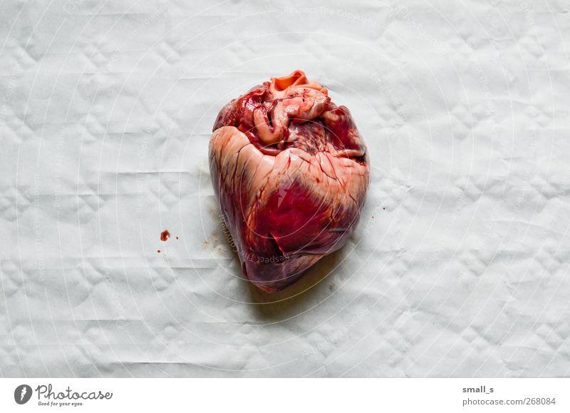 2,85 € Ferkel 1 Tier Leder Herz Gefühle Liebe Mitgefühl Gesundheit Leidenschaft Mut Farbfoto Detailaufnahme Makroaufnahme Menschenleer Hintergrund neutral