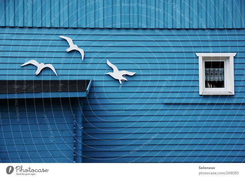 komm, wir machen einen Abflug blau Ferien & Urlaub & Reisen Haus Fenster Wand Holz Küste Freiheit klein Garten Mauer Gebäude Vogel Wohnung Fassade fliegen