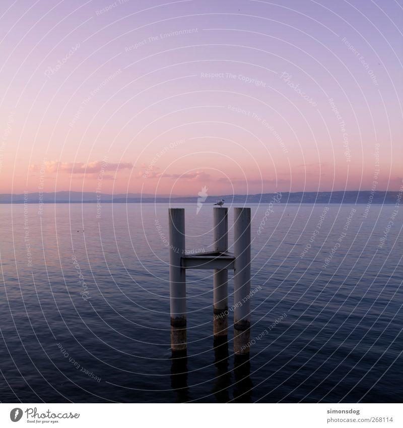 freitag abend Umwelt Natur Landschaft Urelemente Wasser Himmel Wolken Horizont Wetter Schönes Wetter Wellen See genießen Zufriedenheit Erholung Idylle ruhig