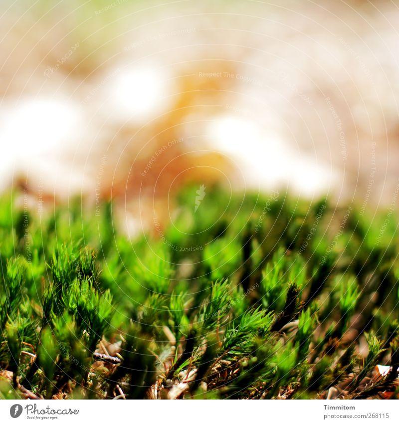 Vom Waldboden Natur grün Pflanze Umwelt natürlich ästhetisch Moos