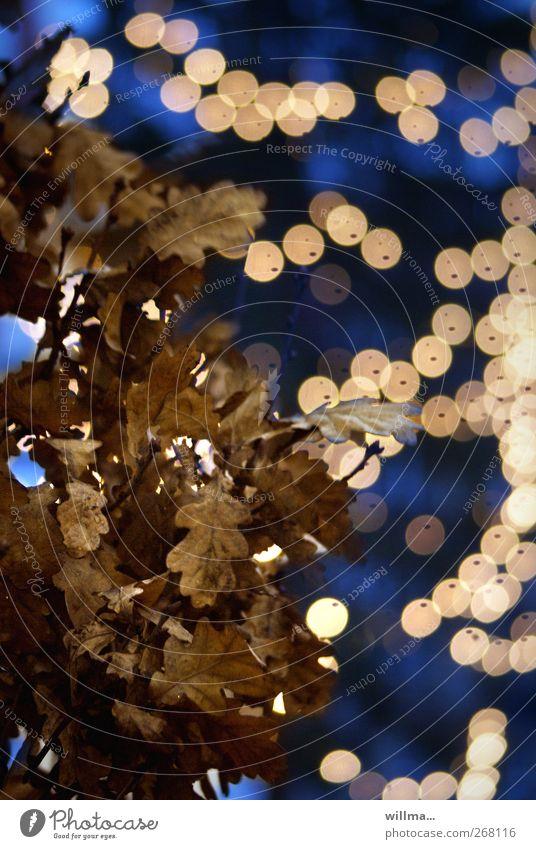 Herbstliche Weihnacht Licht Lichterkette Lichtspiel Baum Eiche Eichenblatt glänzend leuchten Vergänglichkeit welk Feste & Feiern Weihnachtsbaum