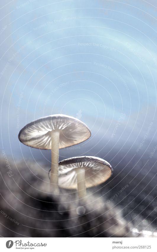 Meine Ersten in diesem Jahr Himmel Natur blau Sommer Pflanze Wolken Herbst Frühling braun Erde elegant Wachstum Schönes Wetter Pilz Makroaufnahme Pilzhut