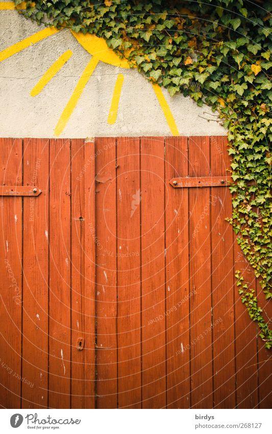 Freude, die Sonne kommt raus ! Efeu Tür leuchten ästhetisch Freundlichkeit Fröhlichkeit lustig gelb grün rot Warmherzigkeit einzigartig Kreativität Kunst Natur