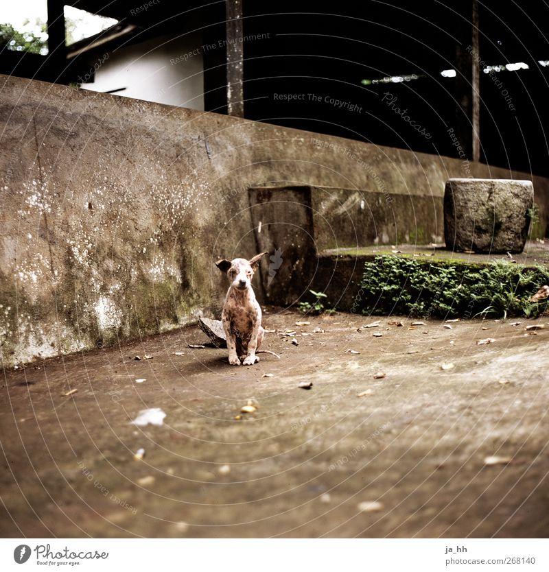 Hund Einsamkeit klein niedlich Sehnsucht Appetit & Hunger Haustier Durst Überleben Verantwortung Tierliebe Welpe Mitgefühl Außenseiter Bali Indonesien