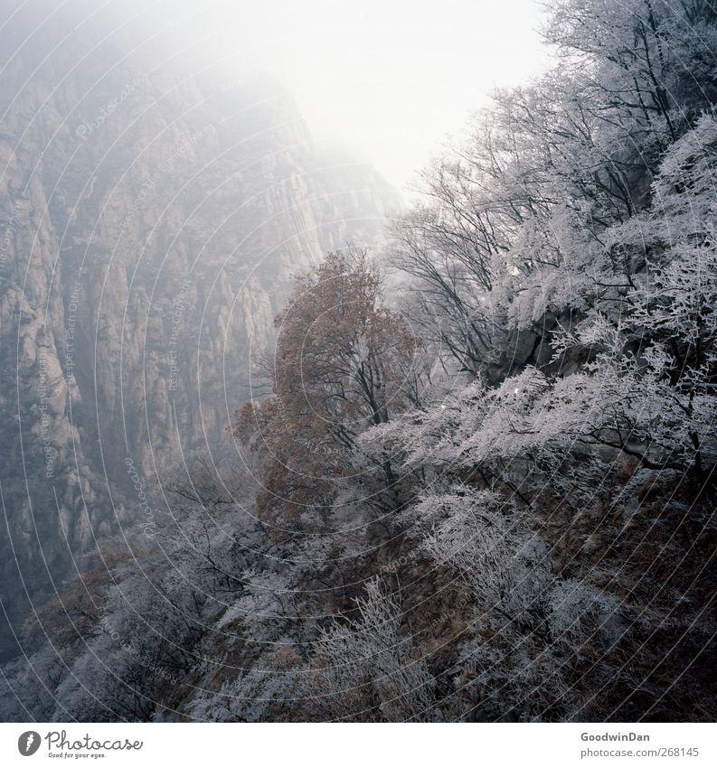 Into the wilderness. Himmel Natur Baum Pflanze Winter Wald Umwelt Landschaft kalt Berge u. Gebirge Park Wetter natürlich groß authentisch viele