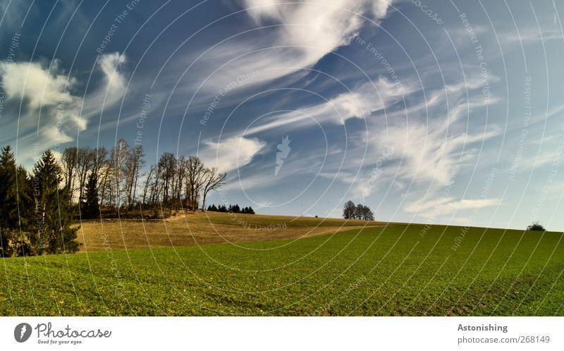 Wolkenfetzen Himmel Natur blau weiß grün Baum Pflanze Blatt Umwelt Landschaft Wiese Wärme Frühling Gras Luft