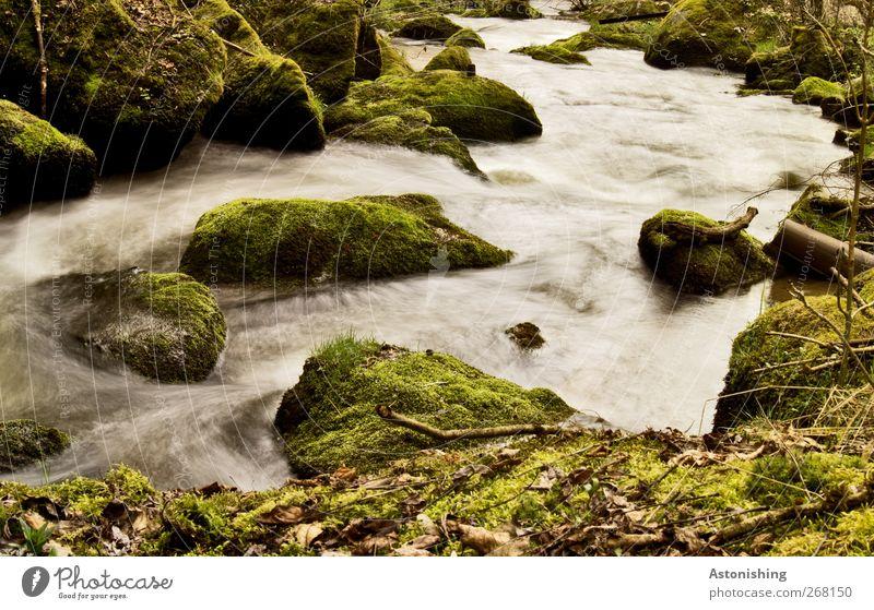 Flussabwärts Umwelt Natur Landschaft Pflanze Wasser Frühling Wärme Sträucher Moos Blatt Wald Felsen Flussufer Stein grau grün weiß Unschärfe Bewegungsunschärfe