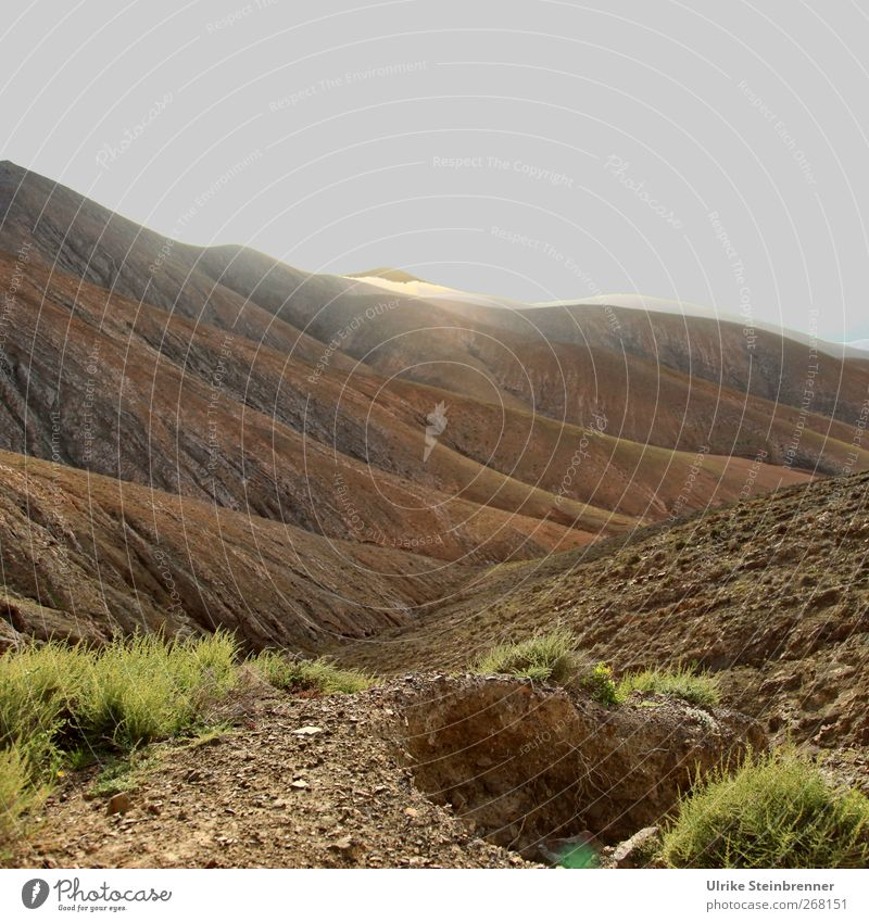 Magic Mountain Natur Landschaft Pflanze Erde Sand Himmel Frühling Gras Hügel Felsen Berge u. Gebirge Vulkan glänzend leuchten außergewöhnlich braun grau