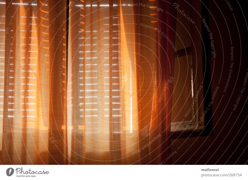Schlafzimmerblick II harmonisch Zufriedenheit Erholung ruhig Meditation Häusliches Leben Wohnung Fenster Fensterladen Fensterrahmen Fensterblick Gardine