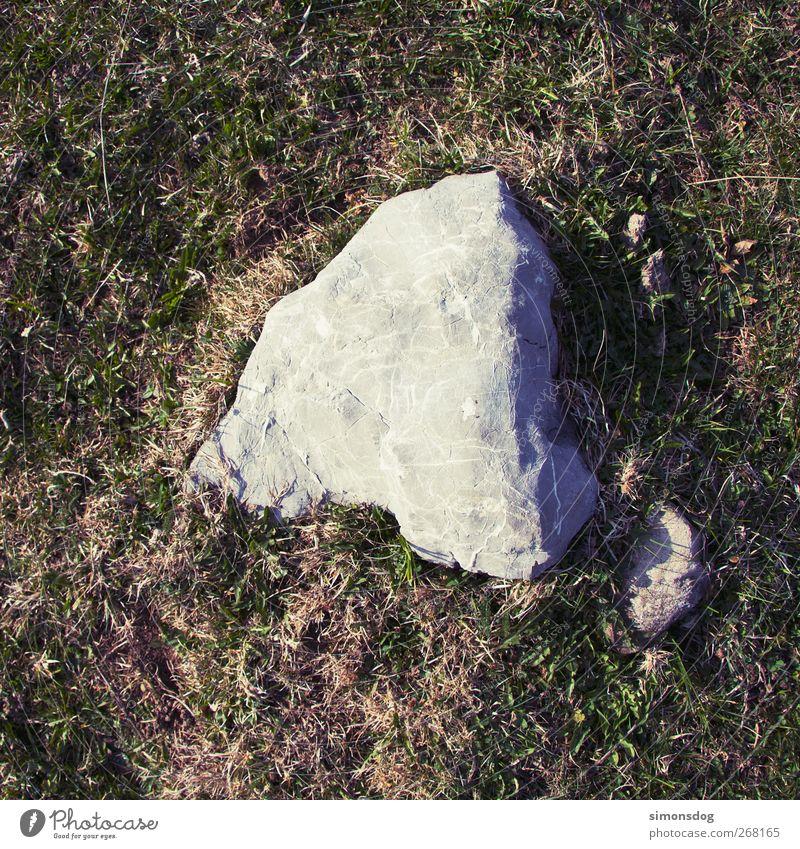 ruhe Natur Pflanze ruhig Umwelt Wiese Gras grau Stein Felsen liegen Urelemente Wandel & Veränderung Idylle fest Meditation geduldig