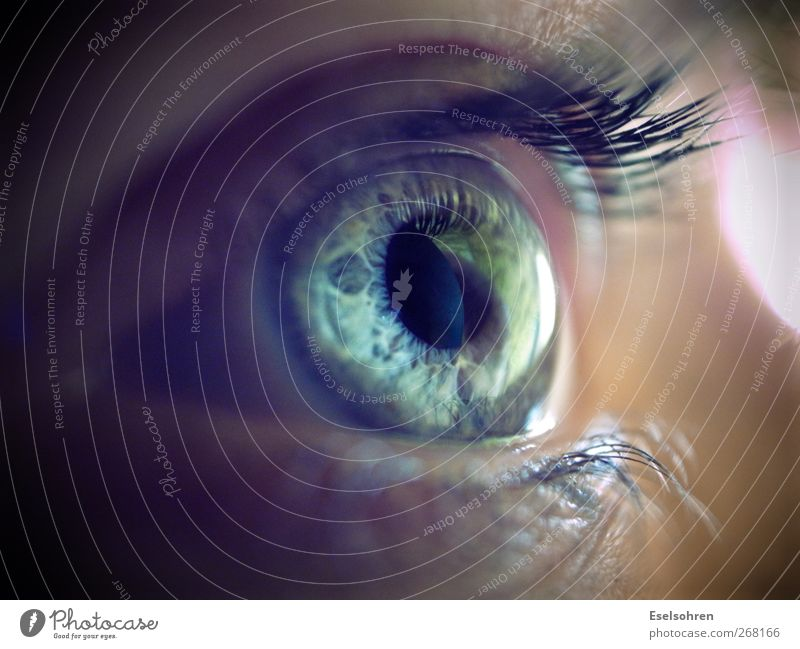 .... feminin Frau Erwachsene Gesicht Auge 1 Mensch beobachten Blick kalt natürlich Neugier blau grau ruhig Wimpern Regenbogenhaut Farbfoto Innenaufnahme