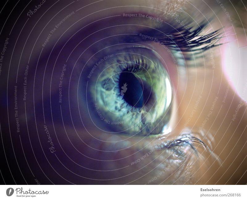 .... Mensch Frau blau ruhig Gesicht Erwachsene Auge kalt feminin grau natürlich beobachten Neugier Wimpern Regenbogenhaut