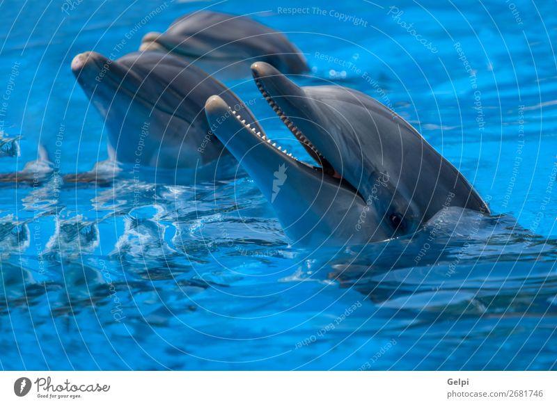 Lustige Delfine im Pool während einer Show in einem Zoo Freude Glück Gesicht Leben Schwimmbad Spielen Sommer Meer tauchen Natur Tier Park Aquarium Lächeln