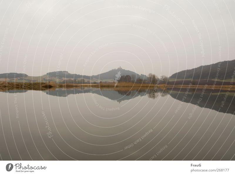 Spiegellandschaft Natur Landschaft Wasser Himmel Frühling Blume Gras Sträucher See ästhetisch schön braun grau ruhig Zufriedenheit Stimmung Symmetrie Ferne