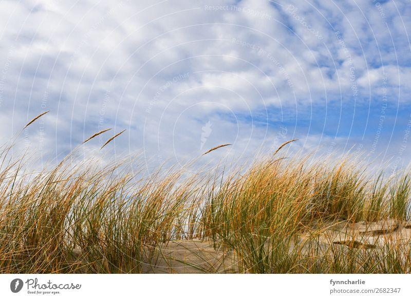 Dünenzauber Umwelt Natur Landschaft Pflanze Sand Luft Himmel Wolken Sonne Herbst Klima Wetter Schönes Wetter Gras Sträucher Küste Strand Bucht Nordsee Insel