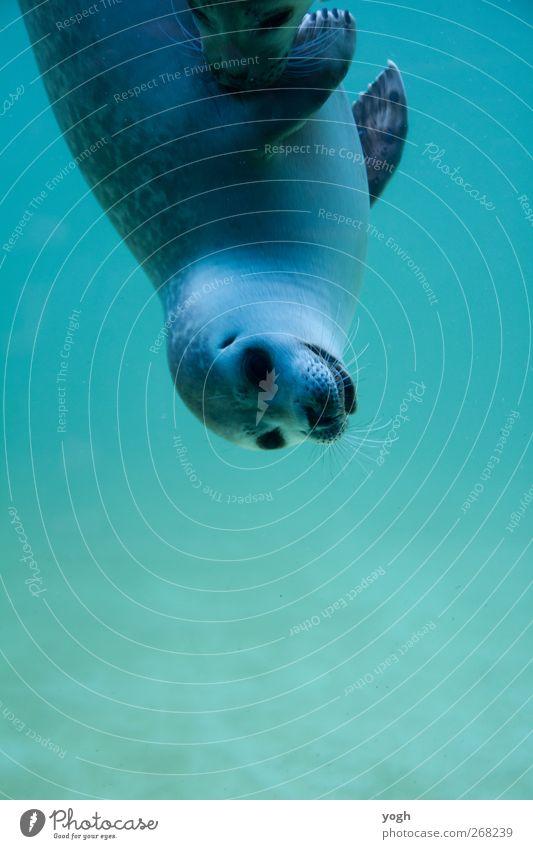 Guckuck blau Wasser Freude Tier ruhig Umwelt Frühling Freiheit Tierjunges Zufriedenheit Geschwindigkeit Fröhlichkeit Neugier Tiergesicht Nordsee Gelassenheit