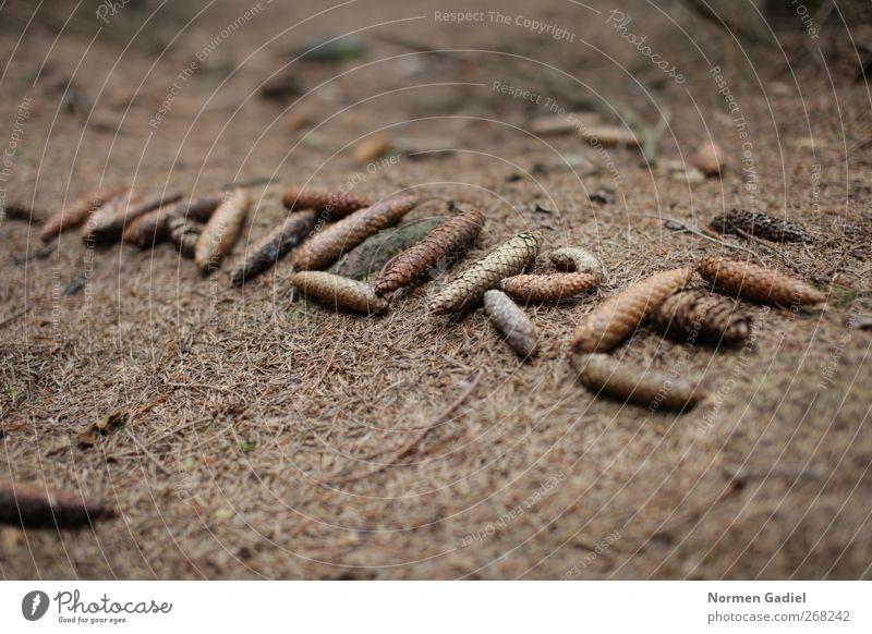 Nature Umwelt Erde Herbst Klima Klimawandel Pflanze Wald Leben Umweltverschmutzung Umweltschutz Zapfen braun Nadelbaum Tannennadel Schriftzeichen nachhaltig