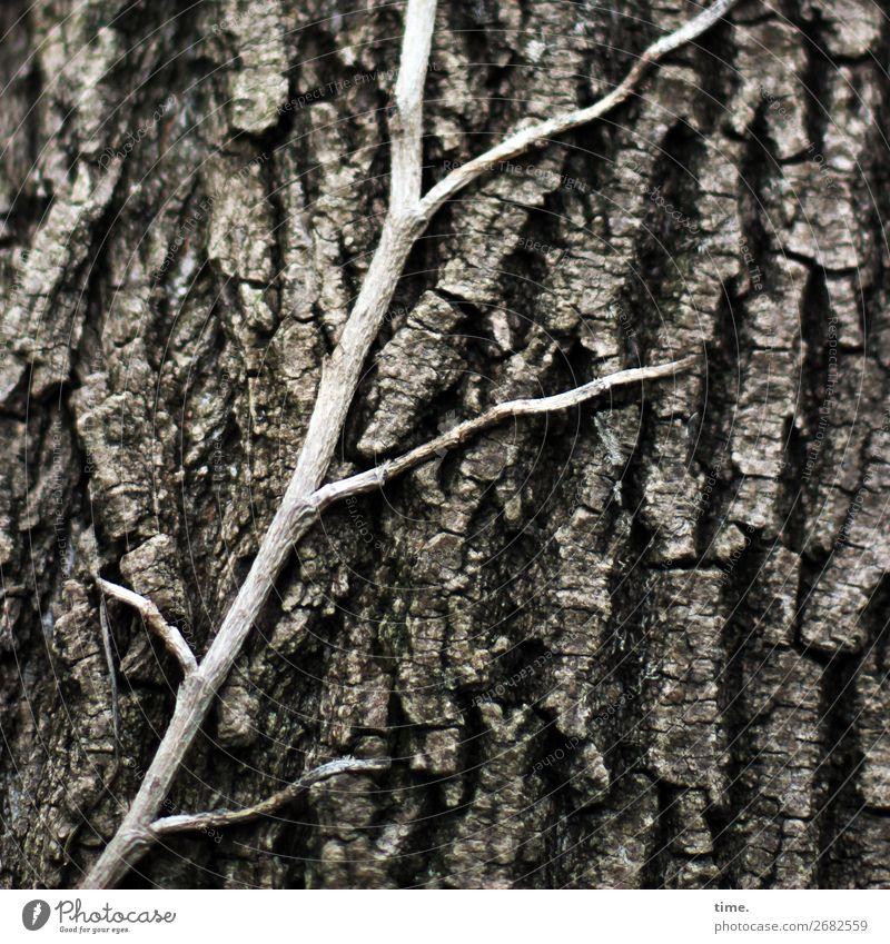 am Leben kleben | Alterserscheinungen Baum Efeu Wildpflanze Baumstamm Baumrinde Furche Wald Wachstum alt ästhetisch natürlich Neugier Freundschaft Zusammensein
