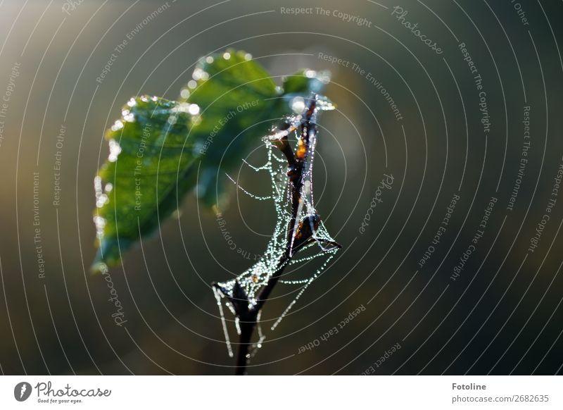 Geschmeide für Willma... Natur Pflanze schön grün Wasser Baum Herbst Umwelt natürlich braun frisch Schönes Wetter Wassertropfen nass Urelemente Spinnennetz