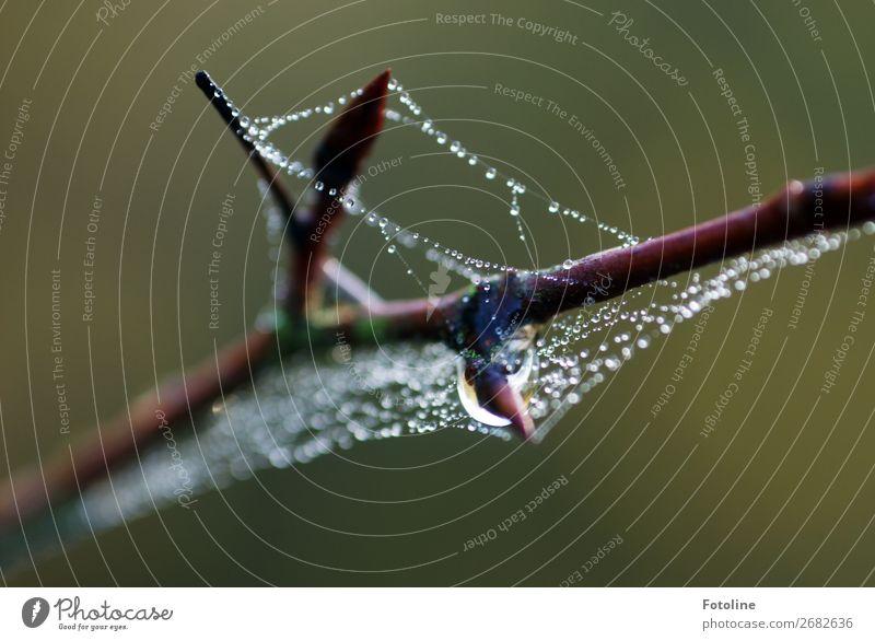 Getropfe Umwelt Natur Pflanze Urelemente Wasser Wassertropfen Herbst Wildpflanze Flüssigkeit nah nass natürlich schön braun grün Ast Spinnennetz Spinngewebe Tau