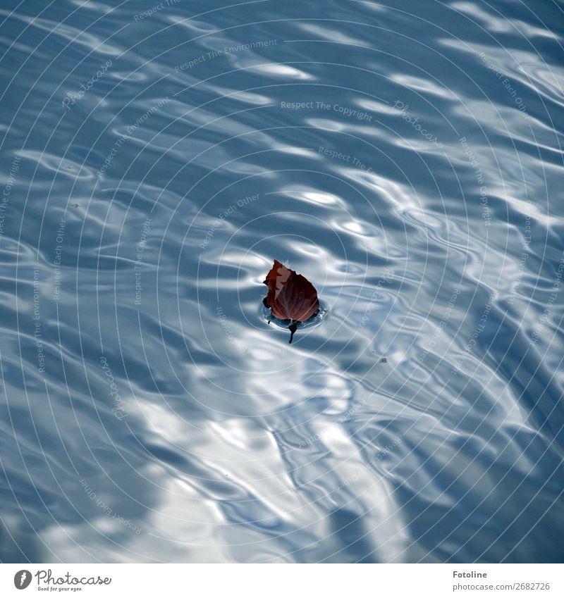 Schiffchen Umwelt Natur Urelemente Wasser Herbst Blatt Wellen Küste Seeufer Teich nass natürlich blau braun Im Wasser treiben Buchenblatt Farbfoto