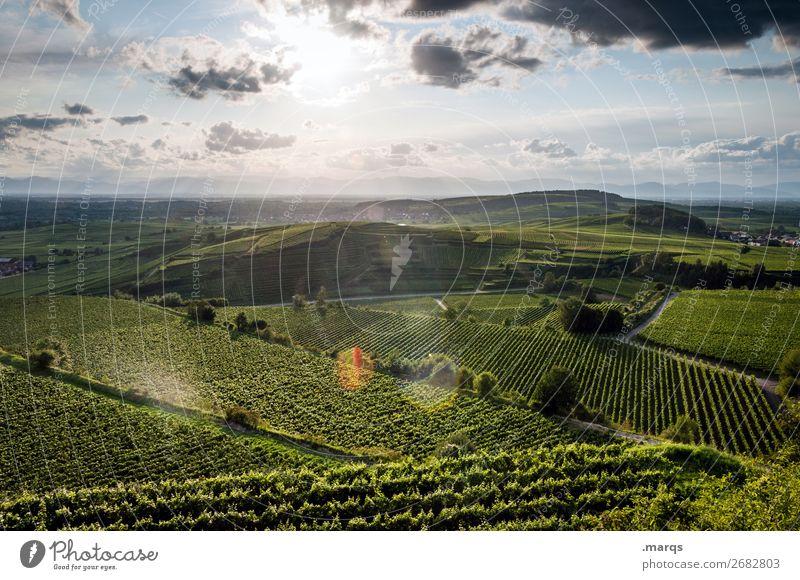 Kaiserstuhl Himmel Ferien & Urlaub & Reisen Natur Sommer Pflanze Landschaft Erholung Tourismus Ausflug wandern Schönes Wetter Hügel Landwirtschaft Weinranken