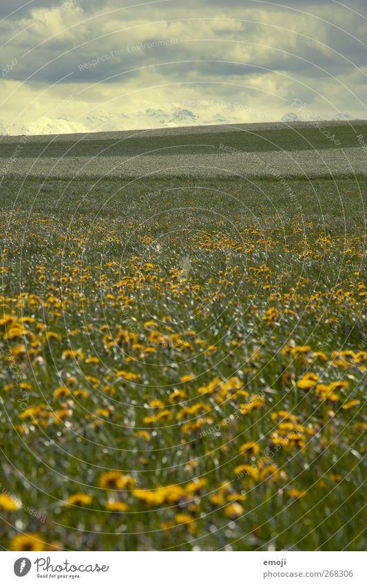 April Landschaft Himmel Wolken Gewitterwolken Frühling Klima Klimawandel Wetter schlechtes Wetter Sturm Wiese Feld dunkel gelb Ringelblume Farbfoto