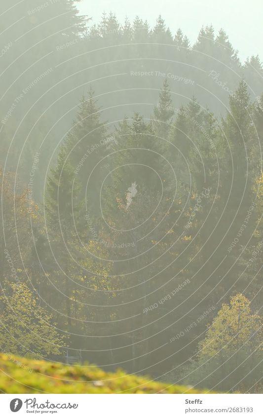 Der Wald hinter dem Hügel Umwelt Natur Landschaft Pflanze Sonnenlicht Herbst Schönes Wetter Nebel Baum Herbstlaub Waldrand Herbstlandschaft Herbstwald schön